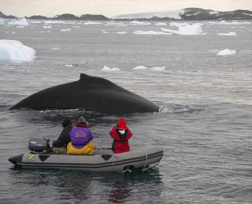 Whale watching in Antarcica