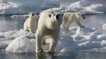 Australis support Frozen Planet Antarctica South Georgia