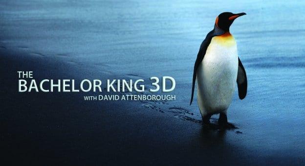 Bachelor King, 3D, David Attenborough, South Georgia