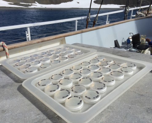 Antarctic algae samples