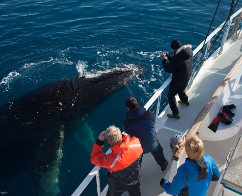 Humpback whale coming to visit yacht Australis in Antarctica