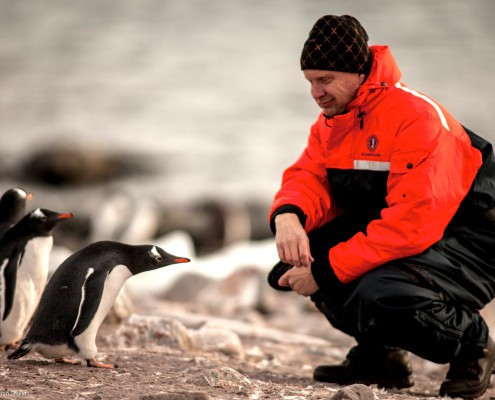 Visiting Gentoo penguins in Antarctica