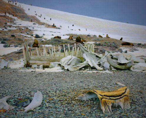 Whalers ruins