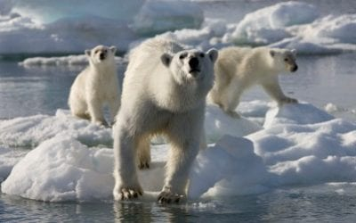'Australis' supports filming of 'Frozen Planet'