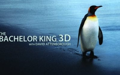 Supported by 'Australis' The Bachelor King in 3D with David Attenborough goes to air