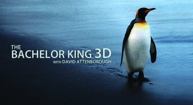 Bachelor King, 3D, David Attenborough, South Georgia